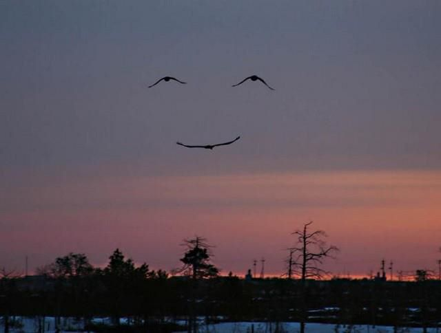 Sometimes even Nature laughs :)